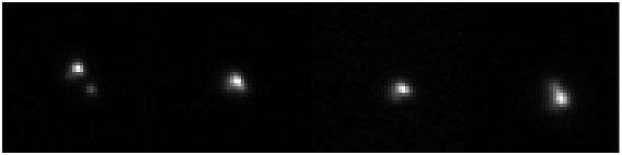 Sequence of images obtained with Univ. of Hawaii's 2.24m telescope, showing Pluto, Charon, and the star occulted by Pluto during the 2002 August Pluto occultation